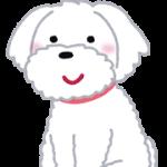 dog_maltese